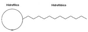 Esquema de uma molécula de surfactante