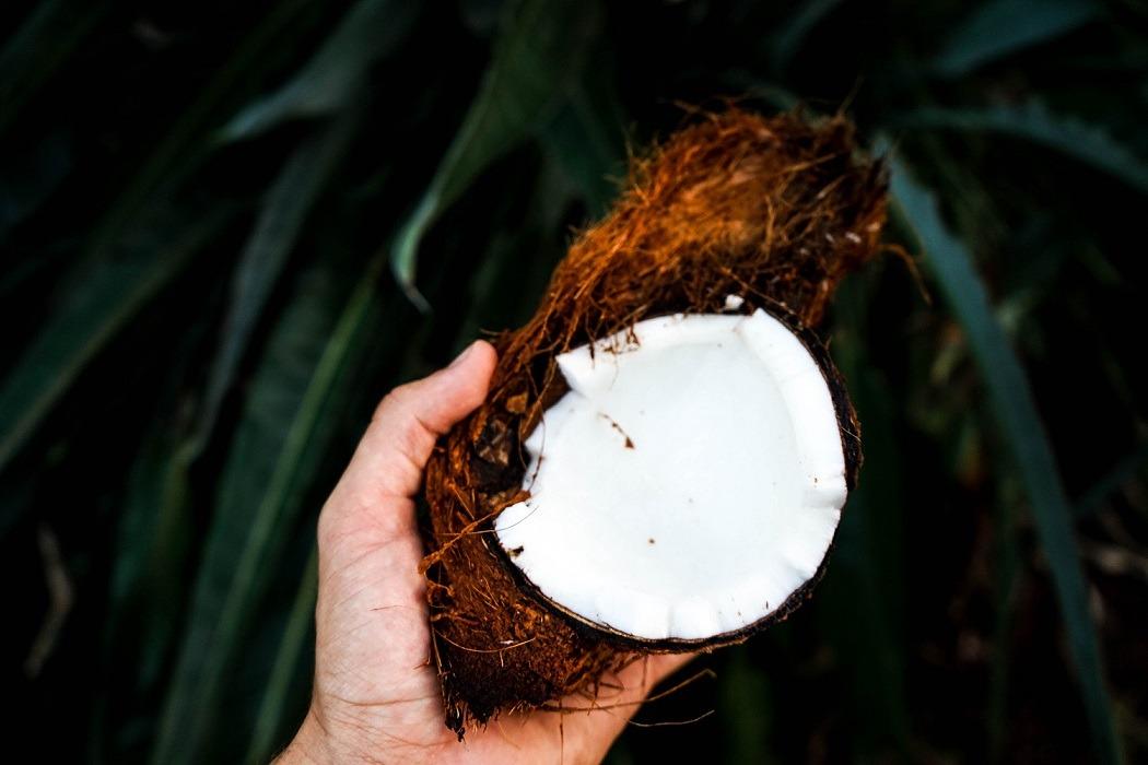 Óleo de coco Benefícios Mitos - Trópica Botânica
