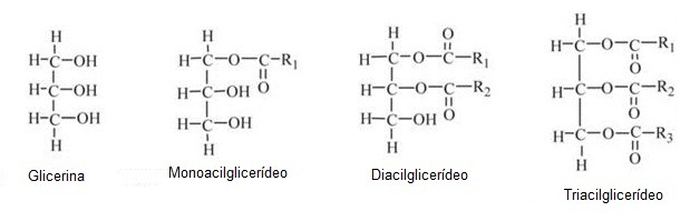 glicerc3addeos